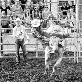 by Theresa Stevens - Sports & Fitness Rodeo/Bull Riding