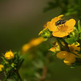 by Miroslava Winklerová - Novices Only Flowers & Plants