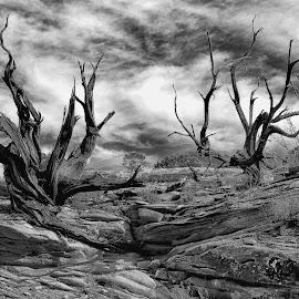 Dead trees by Gosha L - Black & White Landscapes (  )