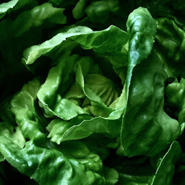 Greener than life  by Magdalena Sitko - Food & Drink Fruits & Vegetables ( crisp, simple, lettuce, green, vegetables, veggies, curves )