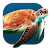 Turtle Underwater Live WP file APK Free for PC, smart TV Download