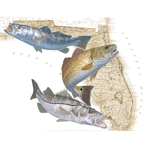 Florida Fishing Regulations For PC / Windows 7/8/10 / Mac – Free Download