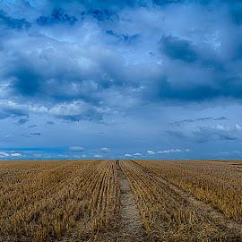 by Dragan Rakocevic - Landscapes Prairies, Meadows & Fields (  )