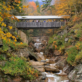 Sentinel Bridge by Leigh Thomson - Landscapes Forests ( water, gorge, flume, forest, usa, new hampshire, nature, franconia, fall, bridge, white mountains, rocks, sentinel bridge, covered )