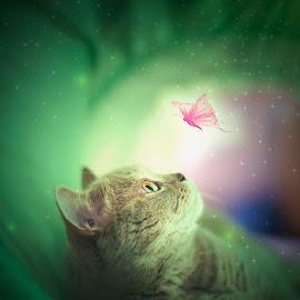 A Secret Place by Donatella Avilda Brusca - Digital Art Animals ( lights, butterfly, cat, fineart, secret )