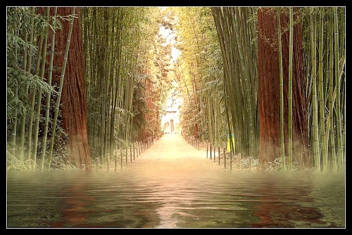 In the bamboo forest by Pam Blackstone - Illustration Sci Fi & Fantasy ( water, reflection, bamboo, fog, ripples, green, bamboo forest, lake, forest, brown, light, mist )