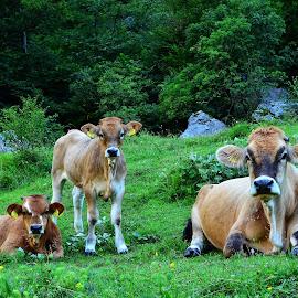 Počitek by Bojan Kolman - Animals Other Mammals