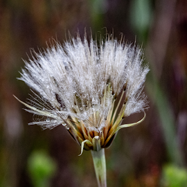 After the Rain by Keith Sutherland - Nature Up Close Leaves & Grasses
