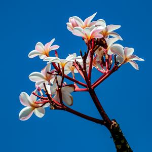 Flower 11 09 18.jpg