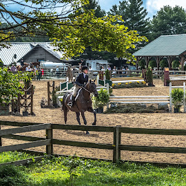 Competting by Mike Watts - Sports & Fitness Other Sports ( hunter, jumps, riding, horse )