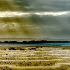 Log by Nigel Bishton - Landscapes Beaches