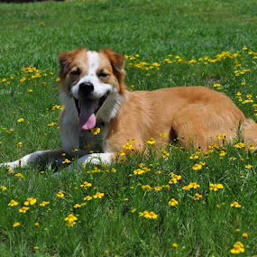 Rocky n wildflowers by Roger White Jr. - Animals - Dogs Portraits ( dogs, pets, flowers,  )