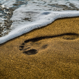 Footprint on the sea beach by Roberto Sorin - Nature Up Close Sand ( shore, freedom, relax, foot, tropical, ocean, footprint, travel, seaside, beach, sandy, landscape, coastline, coast, footstep, nature, sunny, path, alone, footsteps, barefoot, water, sand, seashore, peaceful, track, romantic, journey, sea, mark, print, holiday, footprints, vacation, sunset, background, outdoor, wave, summer, walk, step )