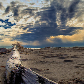 Driftwood by Chris Mowers - Landscapes Beaches ( water, west michigan, michigan, sand, driftwood, desert, michigan state parks, dune, silver lake, beach, evening )