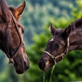 Mother & son by Beeback AlterEgo Biba - Animals Horses ( animals, horses, nature, family, horse )