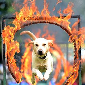 War Dog.jpg
