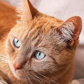What? by Susan Pretorius - Animals - Cats Portraits