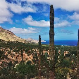 by Phil Bear - Landscapes Deserts ( hills, desert, mexico, beach, coast, cactus, sea of cortez, baja )
