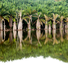 by Steven De Siow - Landscapes Waterscapes ( green, reflection, waterscape, tree, trees,  )