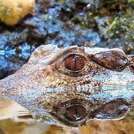 by Jim Byce - Animals Reptiles