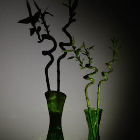by Minette Estoque - Novices Only Flowers & Plants