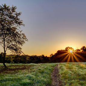 Morning Has Broken by Marietta Caldwell - Landscapes Sunsets & Sunrises ( field, hdr, trees, sunrise, morning, sun )