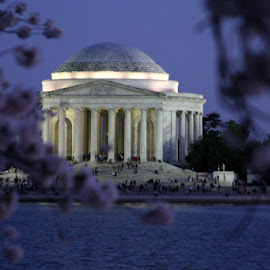 DuskBlue by Sam Long - Buildings & Architecture Statues & Monuments ( the tidal basin, the jefferson memorial, washington dc, the cherry blossoms, people, dusk )