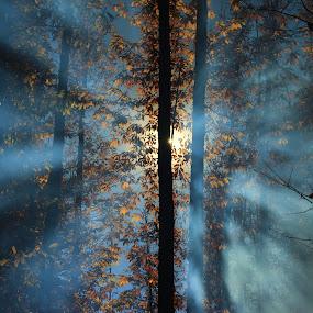 LA LUZ by Miguel Lopez De Haro - Nature Up Close Leaves & Grasses