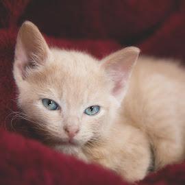 mudbug by Brook Kornegay - Animals - Cats Kittens (  )