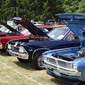 by Steve Hayes - Transportation Automobiles ( auto, car show, hood, classic, lineup )