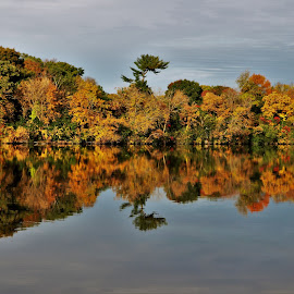 Fall Reflections on the Rock River by Gary Massey - Landscapes Forests ( fall colors, rockford illinois, rock river )