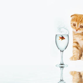 Delusions of grandeur by Pranav Babu - Digital Art Things ( kitten, cat, fish, watersplash, goldfish )