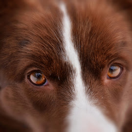 Portret 1 by Bojan Kolman - Animals - Dogs Portraits (  )