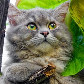 my molly by Ronald Wahyudi - Animals - Cats Portraits