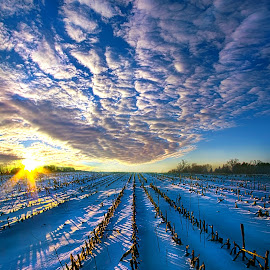 The Places Where I've Been by Phil Koch - Landscapes Prairies, Meadows & Fields ( vertical, yellow, travel, leaves, love, sky, nature, weather, perspective, flowers, light, orange, perpective, art, twilight, journey, horizon, portrait, rows, country, environment, dawn, winter, season, serene, moody, trees, lines, natural, hope, inspirational, wisconsin, ray, joy, beauty, landscape, phil koch, spring, sun, photography, farm, life, emotions, dramatic, horizons, inspired, office, clouds, park, heaven, green, beautiful, scenic, morning, living, shadows, field, red, unity, blue, sunset, amber, peace, meadow, beam, earth, sunrise, garden )