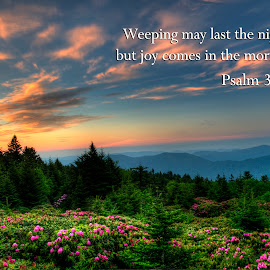 Joy comes in the monrning by Steven Faucette - Typography Quotes & Sentences ( roan mountain, joy, weeping, tennessee, sunrise )