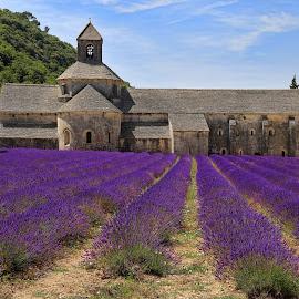 Abbaye Notre-Dame de Sénanque by Stefano Landenna - Buildings & Architecture Public & Historical ( provence, field, purple, church, france, flowers, lavender )