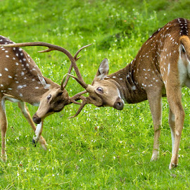 by S Balaji - Animals Other