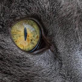 kitty macro by Darleen Stry - Animals - Cats Portraits