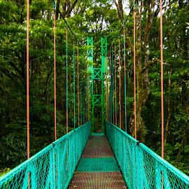 Rainbow Rainforest Bridge by Norma Brandsberg - Buildings & Architecture Bridges & Suspended Structures