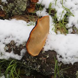 by Libor Marek - Nature Up Close Mushrooms & Fungi