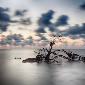 Dead tree at Anne's Beach by Tim Azar - Landscapes Waterscapes ( water, clouds, sand, islamorada, hdr, 1 exposure, tim azar, nik dfine, florida keys, anne's beach, ocean, beach, lower matecumbe key, landscape, hdr efex pro 2, tree, florida, cloudy, long exposure, sunrise, anne eaton )