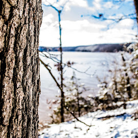 Snowy Day by Payton Bartlett - Landscapes Forests ( water, tree, snow, lake, day )