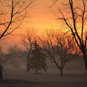 Framed Pine by Thomas Fitzrandolph - Landscapes Sunsets & Sunrises ( nature, western new york, niagara county ny, trees, nikon d5200, sunrise, morning, landscapes, lockport ny )