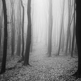 Autumn Wonder III. by Zsolt Zsigmond - Black & White Landscapes ( black and white, autumn, fog, trees, forest, light, woods, mist )