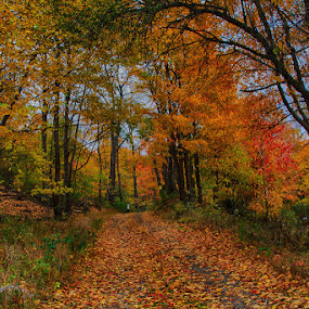 FallPath by Vicki Pardoe - Landscapes Forests