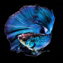 Let's Dance's by Arya Suartawan - Animals Fish ( #beta #bali #fish #macro #indonesia )