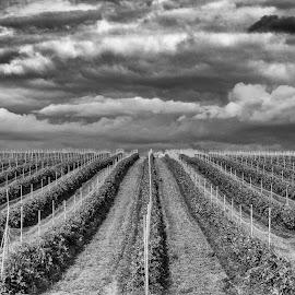 by Terje N. Johansen - Landscapes Prairies, Meadows & Fields