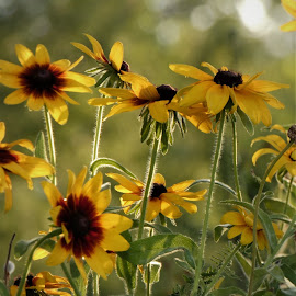 by Denise O'Hern - Flowers Flowers in the Wild