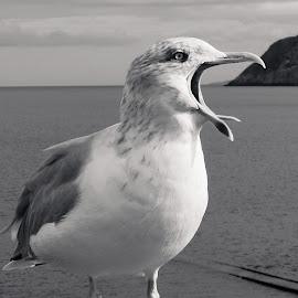 by Emma Payne - Novices Only Wildlife (  )